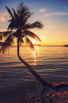 Kokospalm aan tropische kust over zee bij zonsondergang, gemaakt met vintage tonen, warme tinten