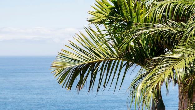 Kokospalm bij de zee