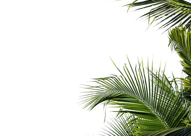 Kokospalm blad geïsoleerd op wit met uitknippad voor object en retoucheer ontwerp.