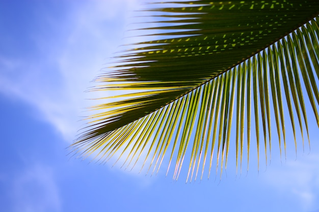 Kokospalm in de zomer met hemelachtergrond
