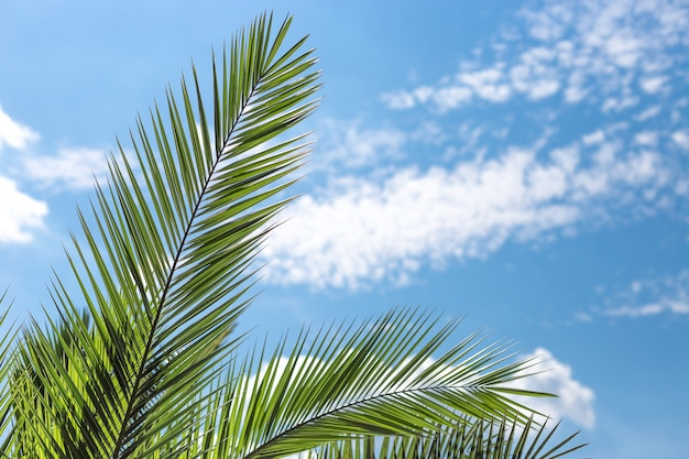Kokospalm met blauwe lucht, mooie tropische achtergrond. natuur concept. plaats voor tekst