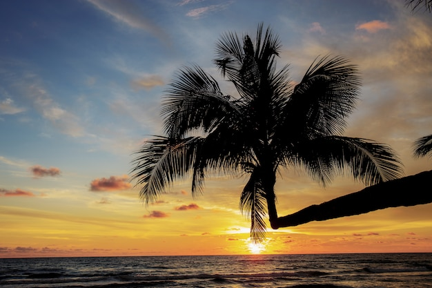 Kokospalm met het silhouet.