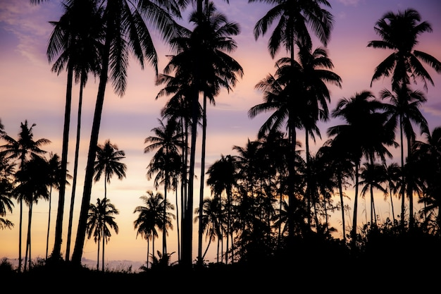 Kokospalm met kleurenhemel.
