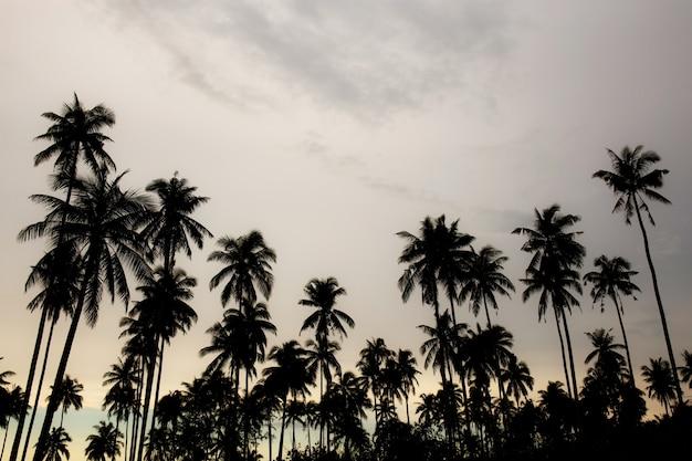 Kokospalm met silhouet.