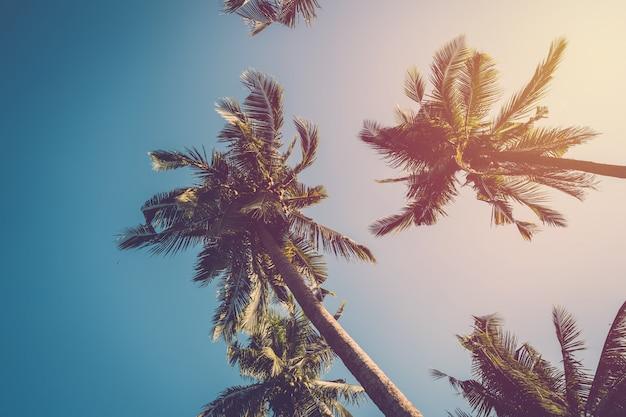 Kokospalm op blauw. vintage filter