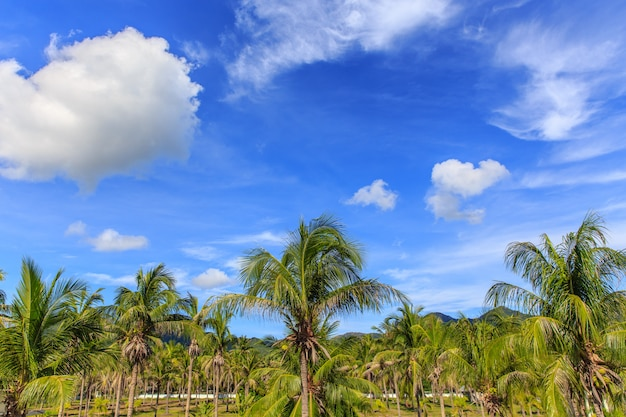 Kokospalm op blauwe hemel in tropisch strand