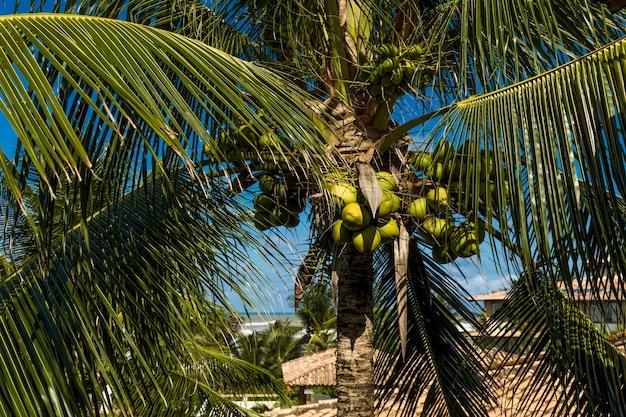 Kokospalm op het strand en een bewolkte blauwe hemel.