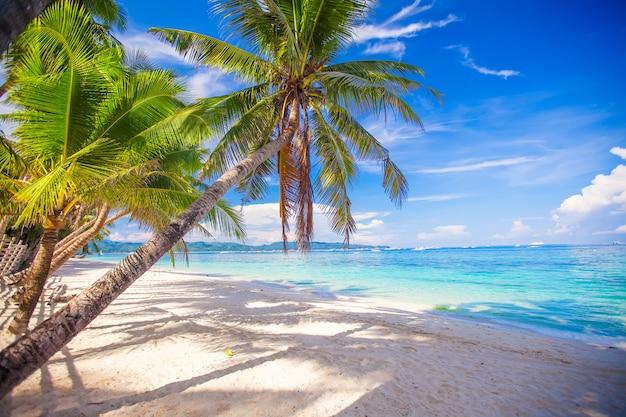 Kokospalm op het witte zandstrand