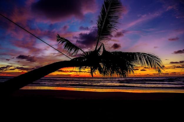 Kokospalm op zee met zonsondergang.