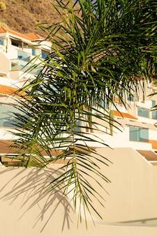 Kokospalmblad met huizen op achtergrond