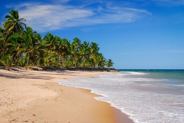 Kokospalmen aan zee in taipu de fora beach penisula de marau bahia brazil