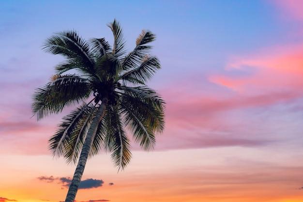Kokospalmen boom en wolken schemering