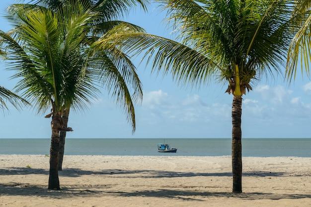 Kokospalmen en boot op het strand van lucena, in de buurt van joao pessoa, paraiba, brazilië op 16 mei 2021.