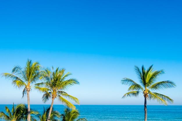Kokospalmen met blauwe hemel