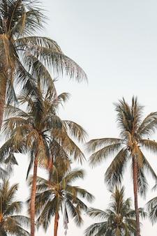 Kokospalmen met hemelachtergrond