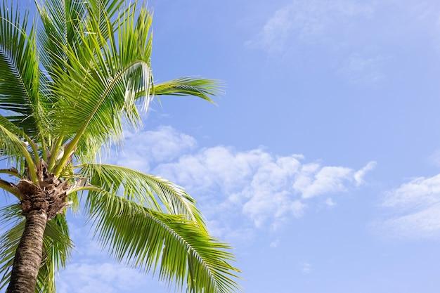 Kokospalmen, mooi tropisch met lucht en wolken.