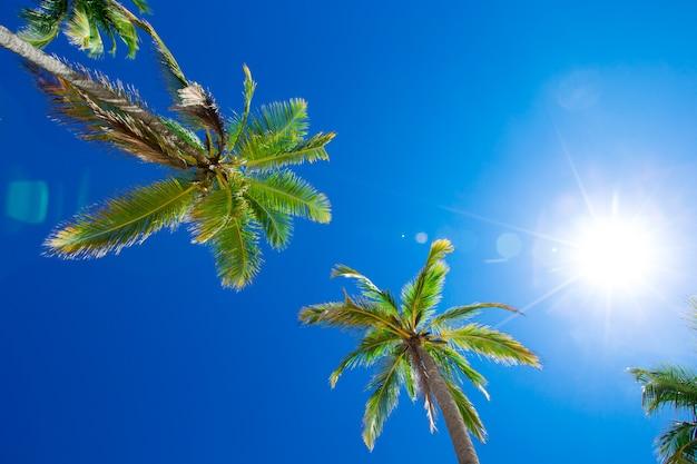 Kokospalmen, mooie tropische achtergrond
