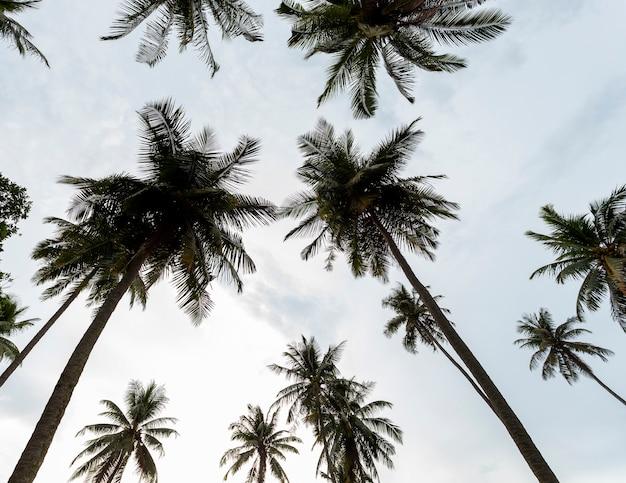 Kokospalmen op de hemelachtergrond