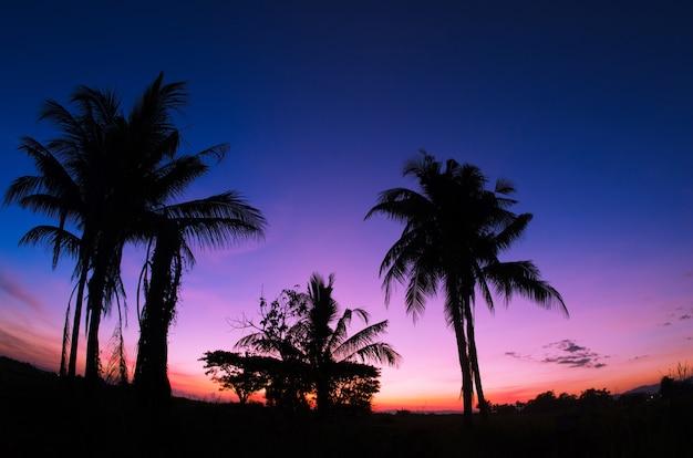 Kokospalmen op een mooi eiland bij zonsondergang
