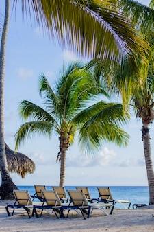 Kokospalmen op het caribisch gebied