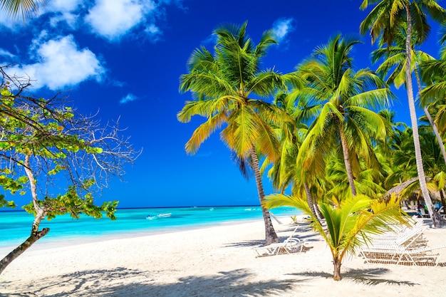 Kokospalmen op het caribische tropische strand. saona-eiland, dominicaanse republiek. vakantie reizen achtergrond.