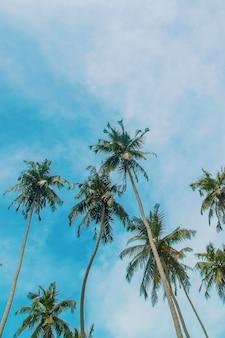 Kokospalmen op het eiland