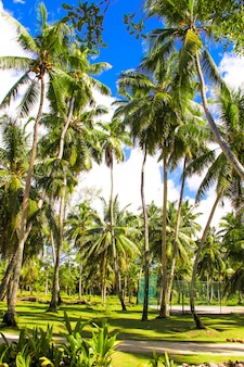 Kokospalmen op het zandstrand in seyshelles