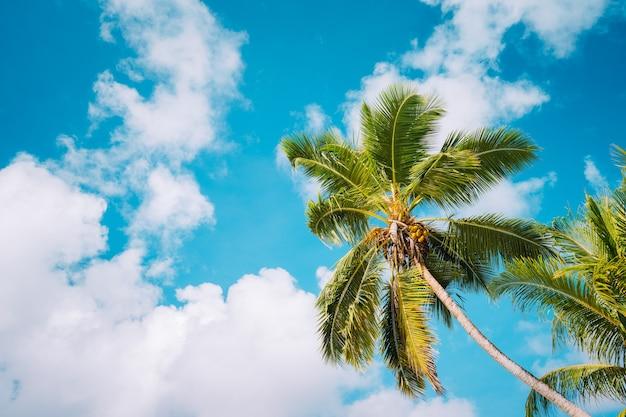 Kokospalmen op tropisch strand tegen een vrij blauwe hemel met witte wolken.