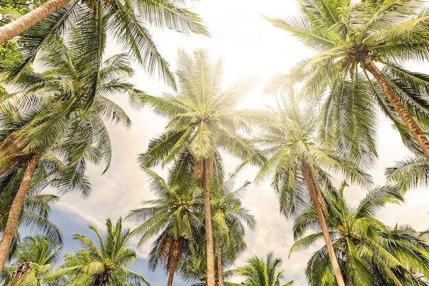 Kokospalmen perspectief weergave