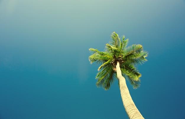 Kokospalmen