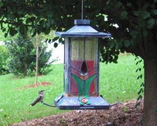 Kolibrie op een feeder