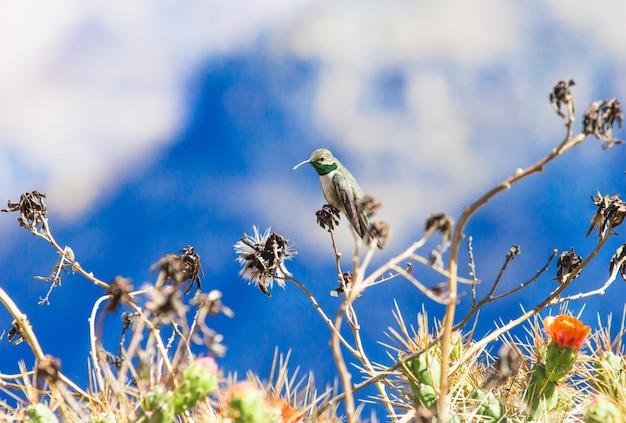 Kolibrie voeden met bloem
