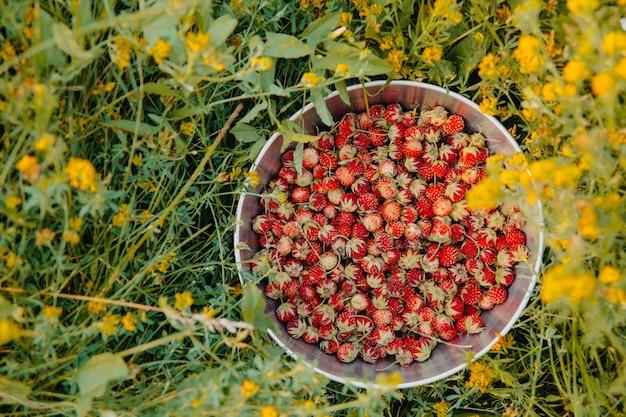Kom wilde aardbeien in een veld omgeven door gele wilde bloemen