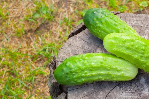 Komkommers op een oude boomstronk