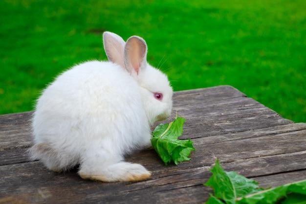Konijn buitenshuis. klein, schattig wit konijn zit op houten tafel en eet blad in de tuin.