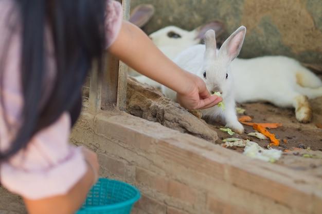 Konijn, konijntje huisdier