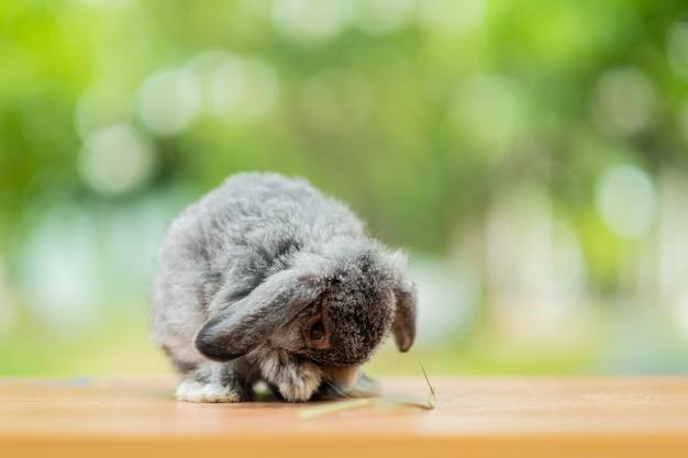 Konijn met groene bokehachtergrond, konijntjeshuisdier