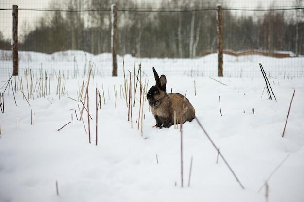 Konijn zittend in de sneeuw