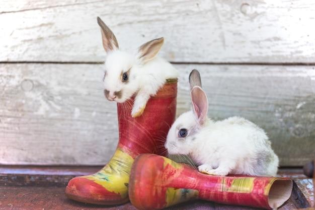 Konijntje en rubberen laarzen in de tuin. zomer