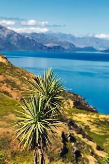 Koolboom dichtbij hawea-meer en mooie bergen van zuideneiland, nieuw zeeland