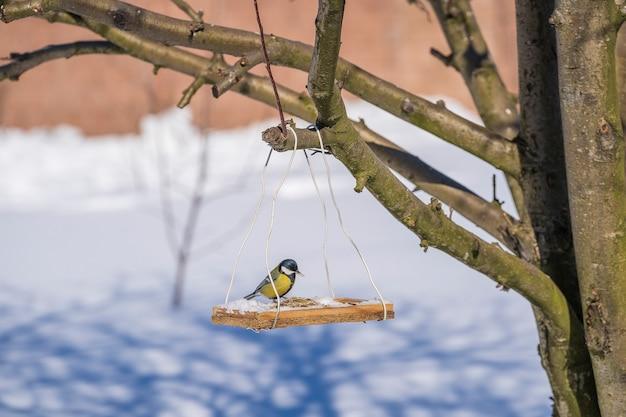 Koolmees parus major op voederbak in de winter