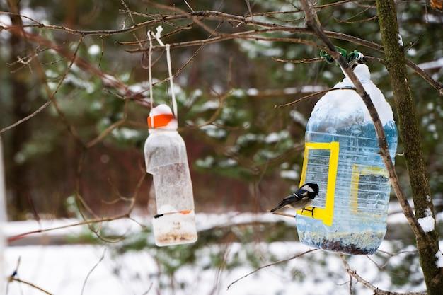 Koolmeesvogel zittend op een feeder gemaakt van plastic fles. zonnige winterdag. stock foto