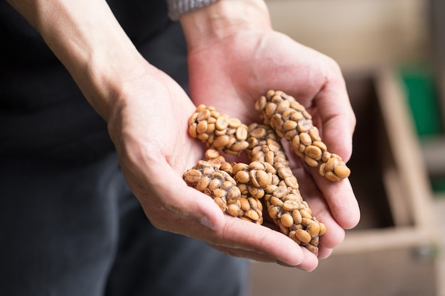 Kopi luwak of civet coffee, koffiebonen die worden uitgescheiden door het civet