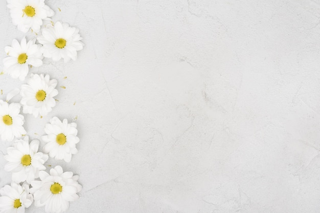 Kopieer de ruimte lente daisy bloemen