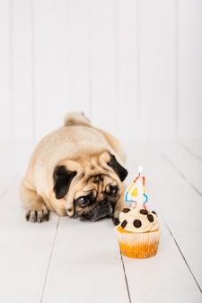 Kopieer ruimte hond met cake voor zijn vierde jaarviering