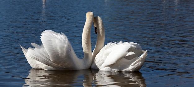 Koppel swan