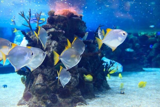 Koraal dieren diep aquarium dier exotisch