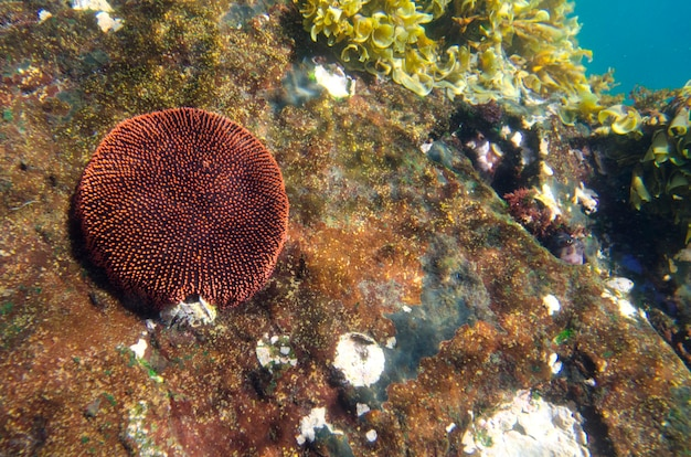 Koraal onderwater, tagus cove, isabela island, galapagos eilanden, ecuador