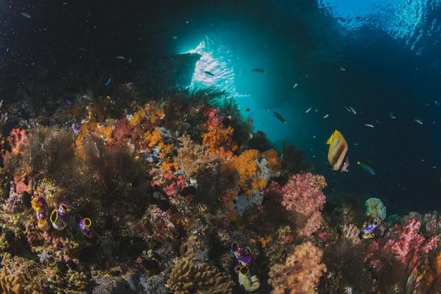 Koraalrif en tropische vissen in zonlicht