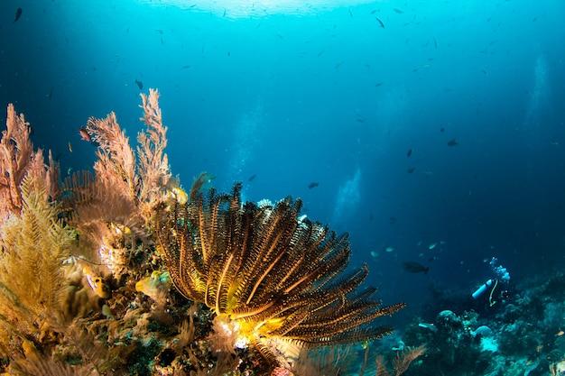 Koraalrif onder blauw helder water